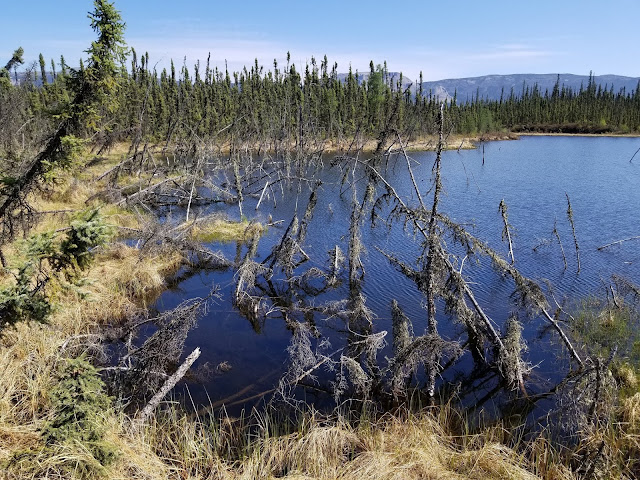 Arctic permafrost thaw plays greater role in climate change than previously estimated