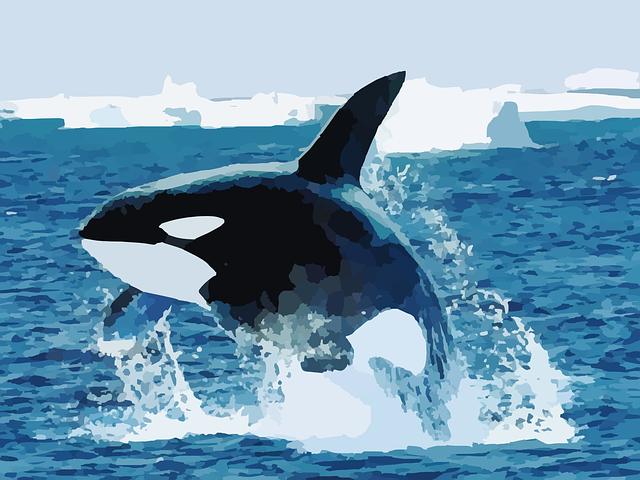 What Happens When A Blue Whale Dies