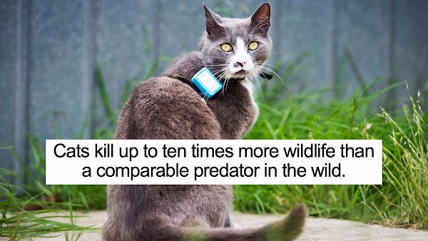 SHOULD YOU LET YOUR CAT GO OUTSIDE? GPS STUDY REVEALS THE DEADLY CONSEQUENCES