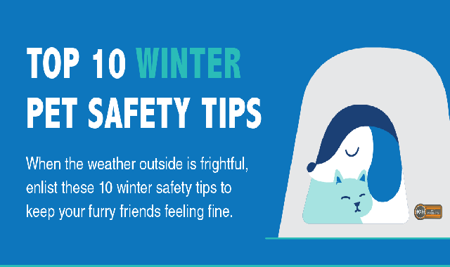 Top 10 Winter Pet Safety Tips #infographic