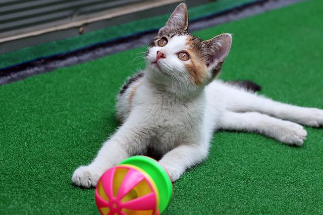 pet toy making business idea