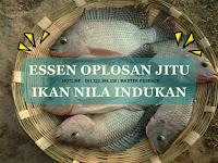 Essen Ikan Nila Khusus Indukan