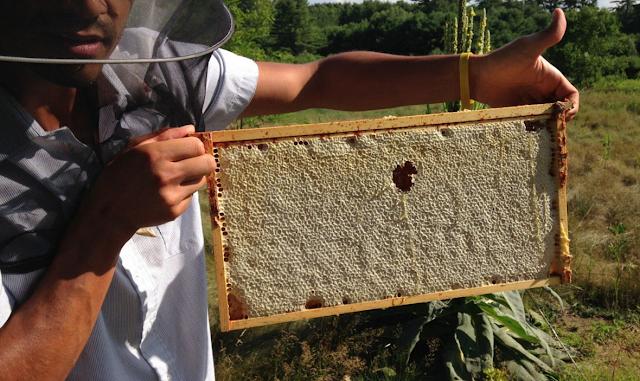 Οι παλιοί μελισσοκόμοι έλεγαν ότι για να βγει πολύ μέλι πρέπει να υπάρχουν τρία πράγματα...