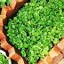 Bayam Brazil ( Brazillian Spinach ) Sayuran Yang Boleh Dijadikan Salad
