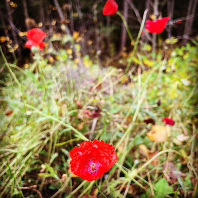 Unikon kukkia hajanaisessa rikkaruohomättäässä