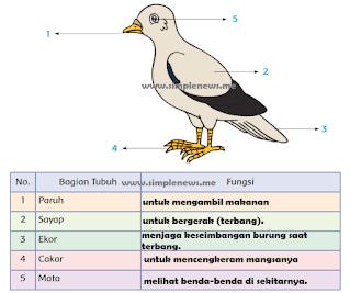 bagian-bagian tubuh burung merpati dan lengkapi tabel www.simplenews.me
