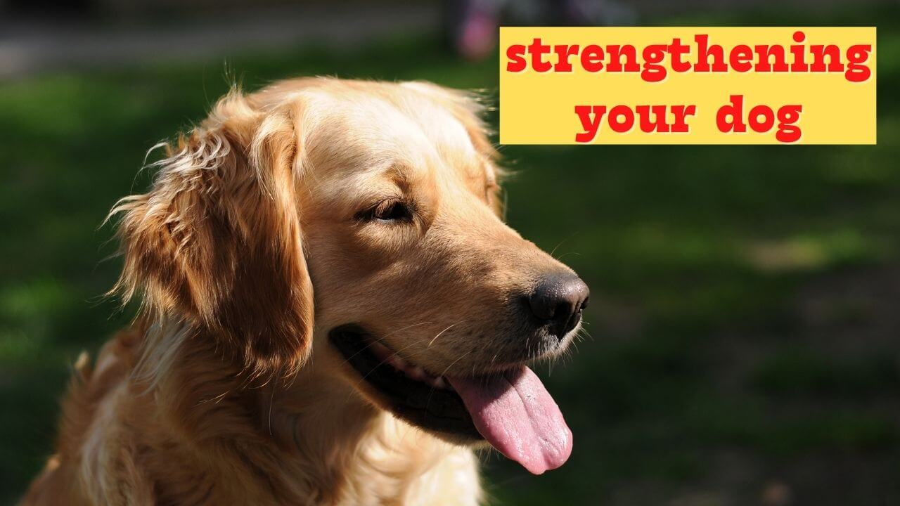 20 inquiries to ask earlier than strengthening your dog