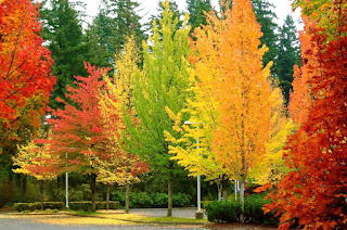 A line-up of similar trees with different colors.