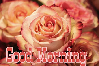 good morning hd flower wishes
