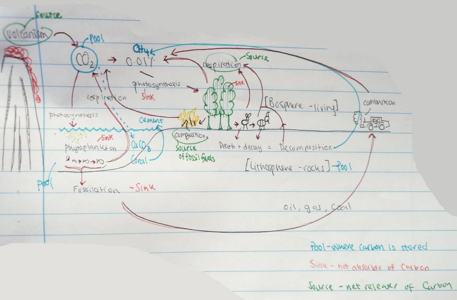 Carbon Cycle Diagram Labeled