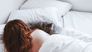 11 razones por las que a los gatos les gusta dormir con sus dueños
