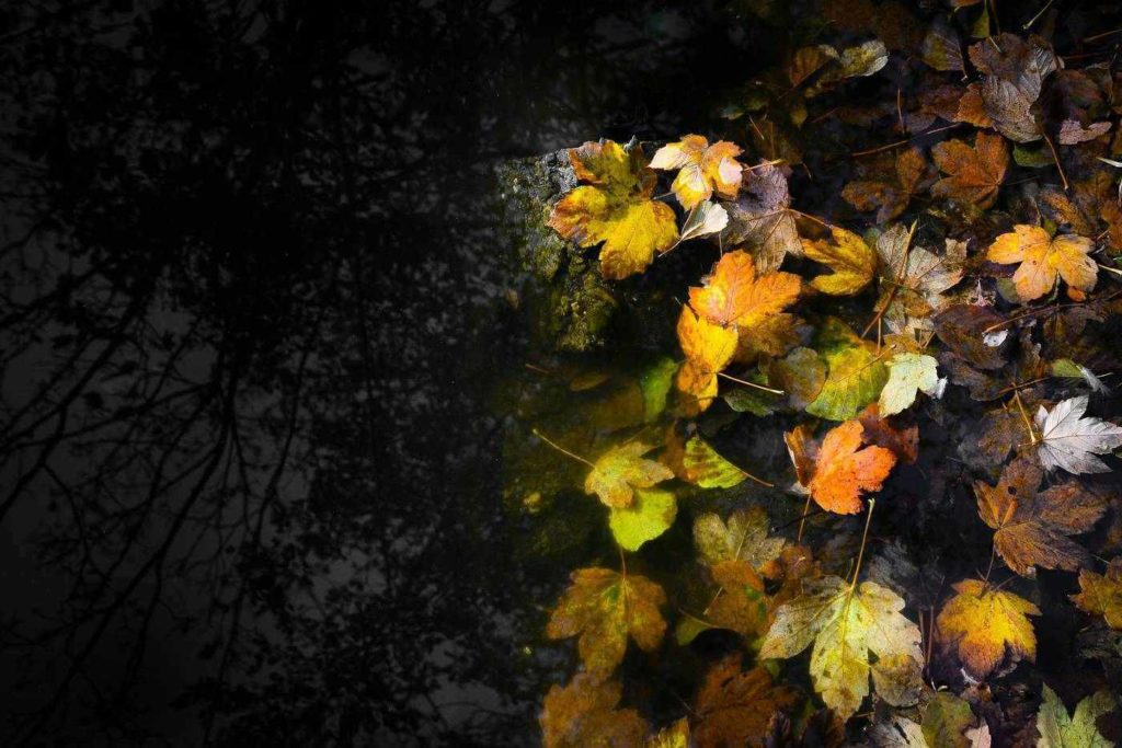 Night walk - Fall