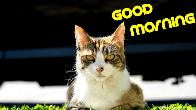 Good morning image cat