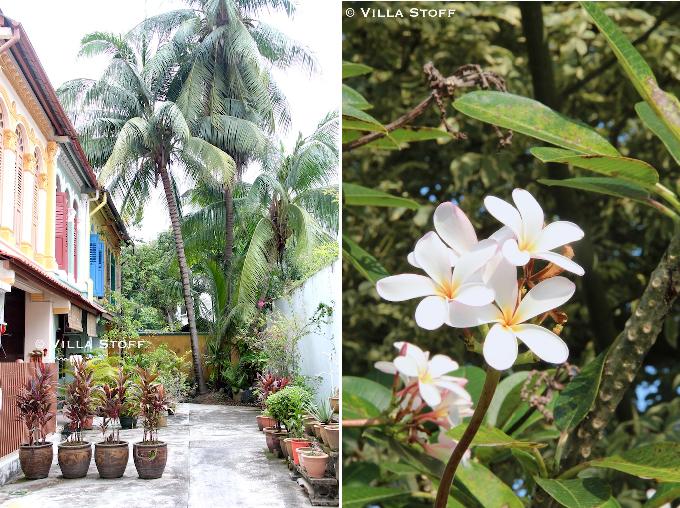 Singapur | bunter Hinterhof Garten