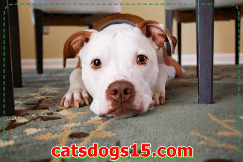 Slideshow: 20 matters you could study out of Your Pets