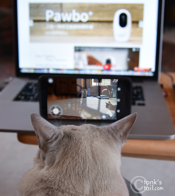 Faraday controls the mobile phone app after reading on the Pawbo website how to use it