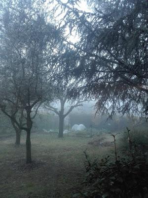 Nebbia nell'orto biologico di Elle e Alli