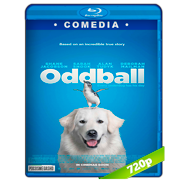 Oddball (2015) BRRip 720p Audio Dual Latino-Ingles