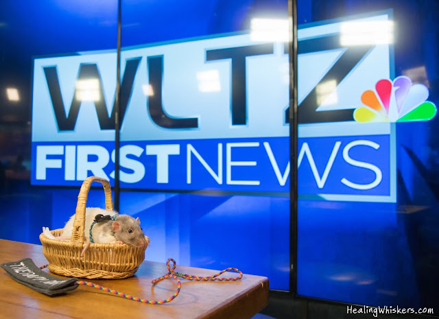 Vincent the Therapy Rat on WLTZ First News Columbus Georgia