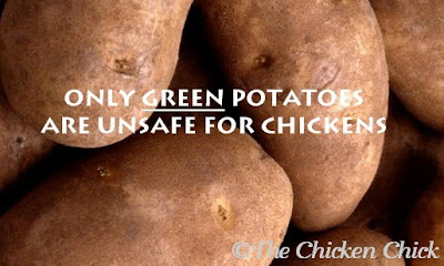 However, the average, healthy human would have to eat 4.5 pounds at one sitting to experience any neurological effects. Similarly, a chicken would need to consume large quantities of green potato skins to experience any effects.