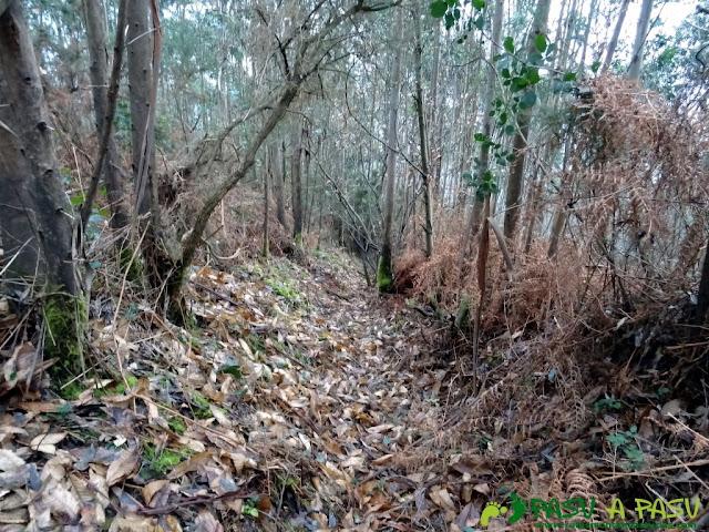 Alto la Corona o Pico La Ablanosa: Tramo de subida por el bosque al alto la Corona