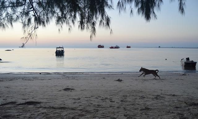 dog running across beach