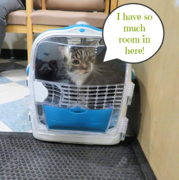 cat in cabrio multifunctional carrier catit