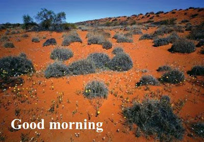 Sweet good morning images with nature download - desert image