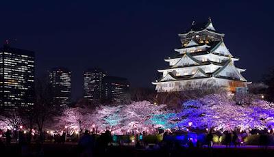 Castelo de Osaka sakura