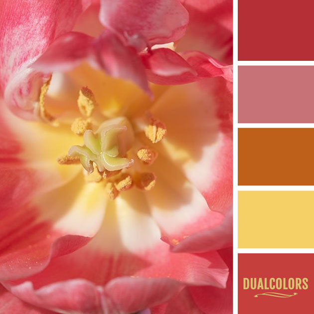 color_paleta_184