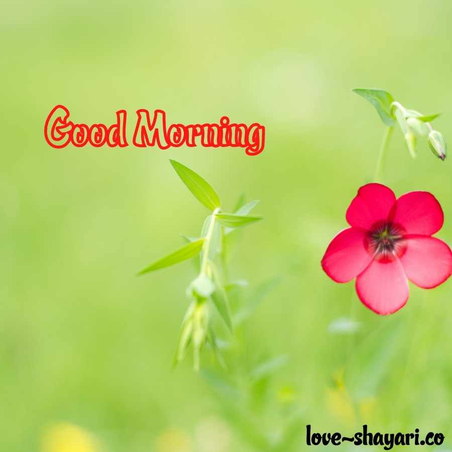 flowers good morning
