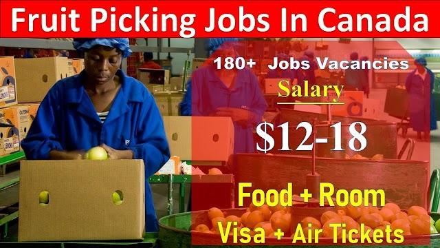 Fruit Picking Jobs in Canada | Job Bank Fruit Picker 2020