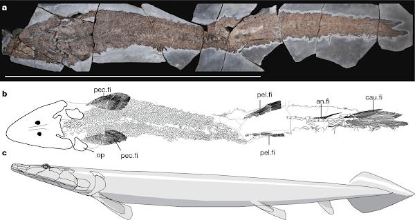 Fósil de Pez antiguo, revela origen evolutivo de la mano humana