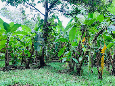 farm for sale in tarlac philippines
