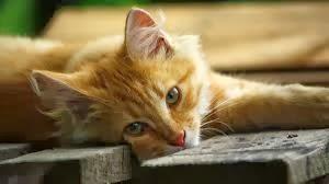 gato cat poesia recitado declamación declamacion