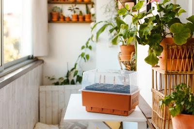 rootmaster mini szklarnia nelson garden