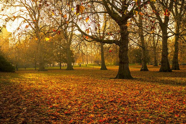 MÙA THU CÔNG VIÊN Autumn-London-Park