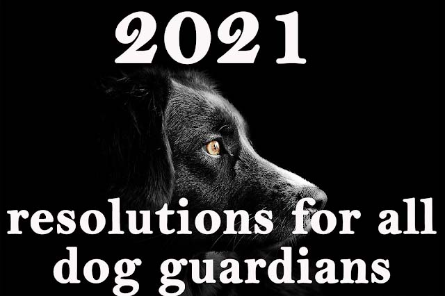 2021 resolutions for all dog guardians