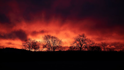 HD Wallpaper Evening, Trees, Silhouettes, Sunset