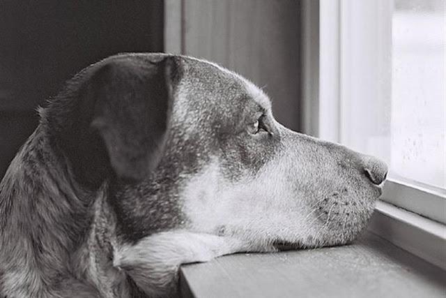 Προσοχή φόλες στο Τολό - Δυο σκυλάκια νεκρά