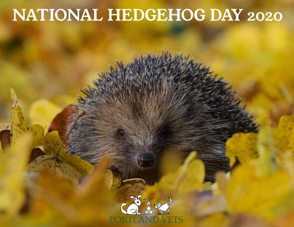 National Hedgehog Day Wishes Sweet Images