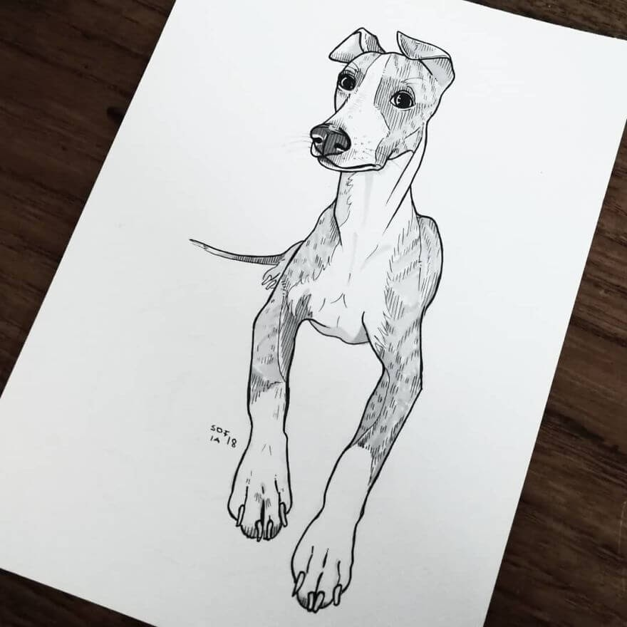 14-Whippet-Sofia-Härö-Black-and-White-Ink-Animal-Drawings-www-designstack-co