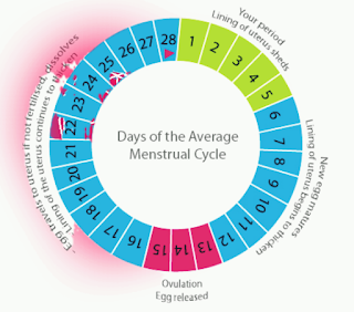 Menstrual cycle; sign and symptoms of irregular menstrual period, treatment of irregular menstrual cycle, menopause stage