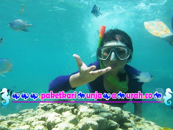 foto snorkeling di karimunjawa paket wisata 2h1m