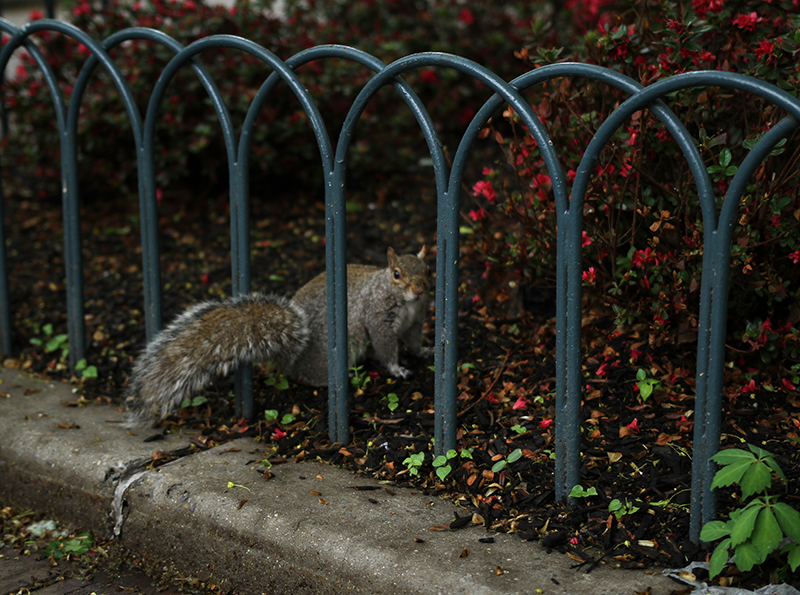 Veganreise New York Squirrel