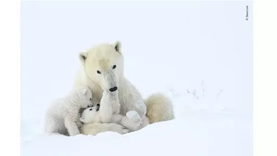 7 Best Photos of 2019 with These Wild Animals Objects Very Cool