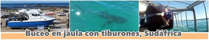 Buceo-jaula-Sudáfrica