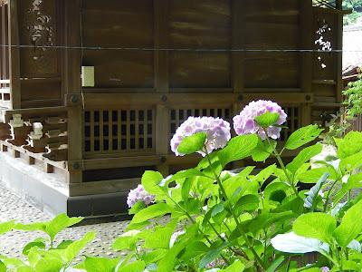 御霊神社のアジサイ