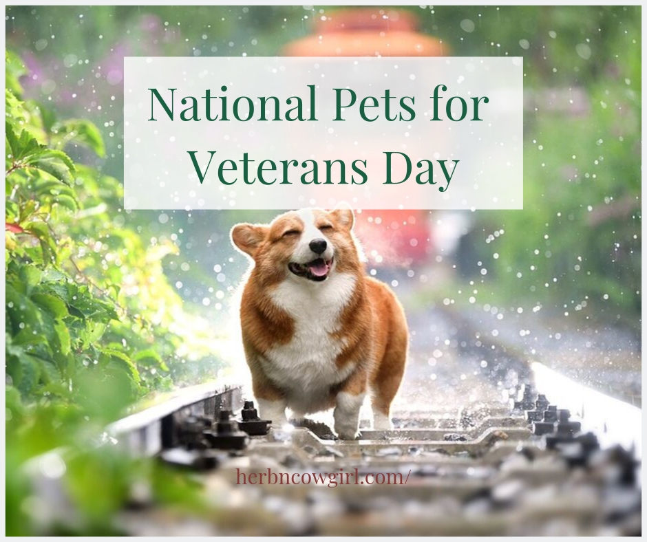 National Pets for Veterans Day Wishes