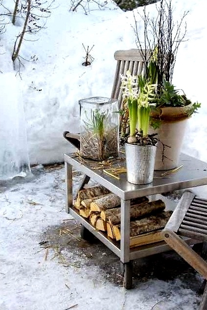 pretty winter garden details with spring flowers